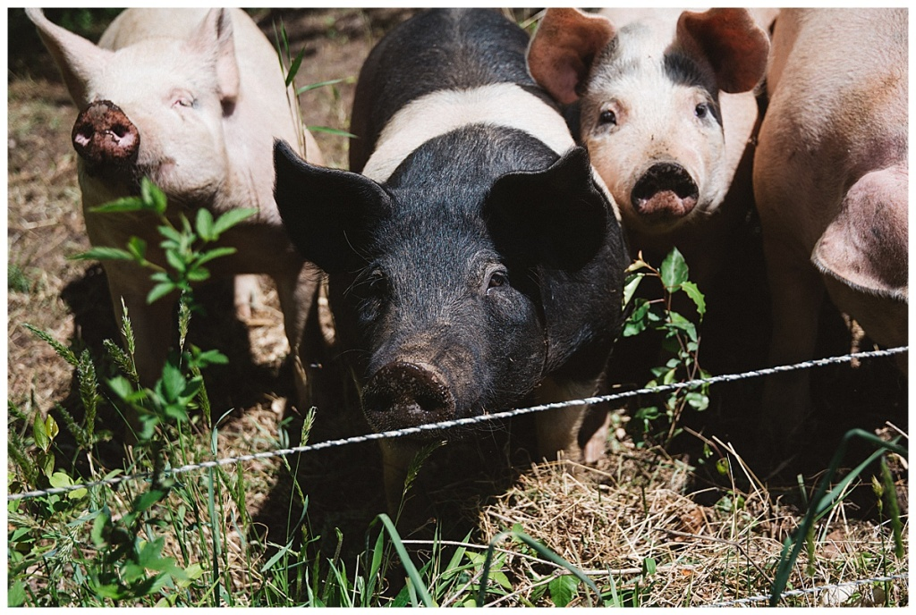 Lenoir, NC Farm