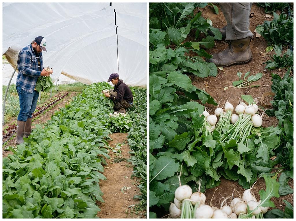 Produce Farm in Lenoir, NC